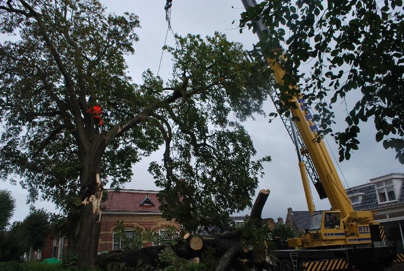 Wanneer beeldbepalende bomen kappen of snoeien?