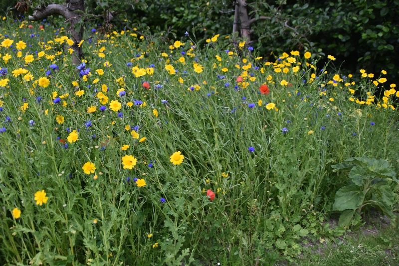 Zomertip: Tuinen met biodiversiteit dorpsstyliste in Berltsum hele zomerperiode geopend